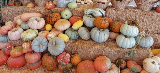 Pumpkins. Photo by Amizur Nachshoni