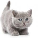 החתול האפור יוצא לאור