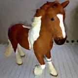 סוסת פרא