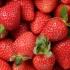 תותי פרוטי