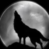 זאב בודד